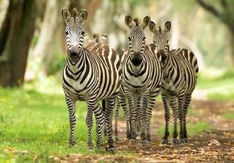 Mombasa, Tsavo & Amboseli National Parks, & Nairobi