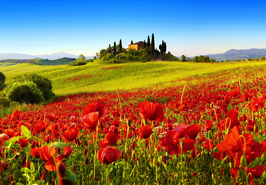 The Best Deal Guide - Tuscany wine & cheese tasting holiday with car hire, Villa La Grotta, Italy - save 33%