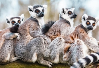 14 nuits à la découverte des trésors de Madagascar, Antananarivo, Morondava, Ranohira, Antsirabe - save 38% -
